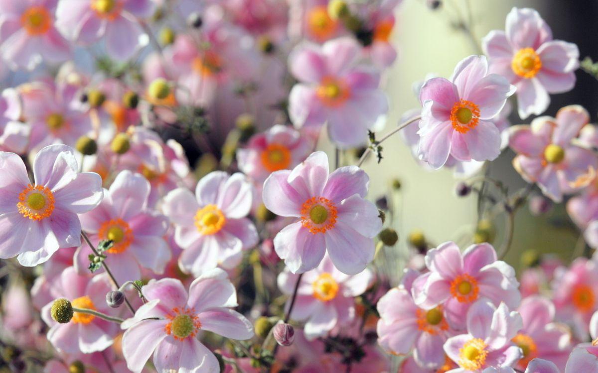 Фото красивых летних цветов