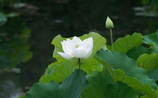 Фото бесплатно цветки, листья, лопухи