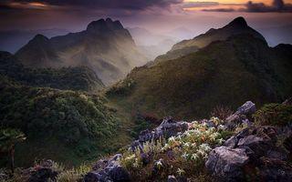 Фото бесплатно цветы, камни, трава