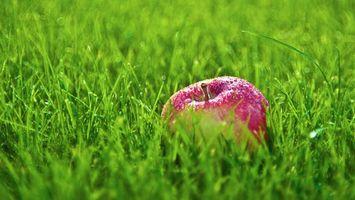 Фото бесплатно яблоко, красное, трава