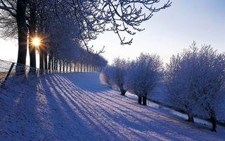 Бесплатные фото зима,парк,деревья,снег,забор,восход,солнце