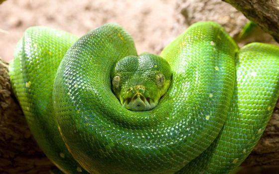 Фото бесплатно змея, зеленая, чешуя