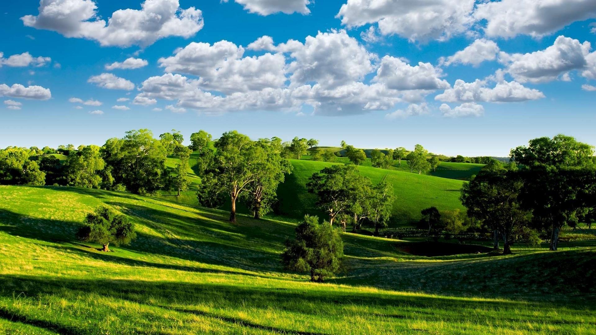природа трава поле небо облака деревья nature grass field the sky clouds trees без смс