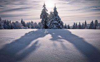 Фото бесплатно елки, зимний пейзаж, снег
