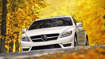 Бесплатные фото мерседес,белый,трасса,лес,очень,листья,машины