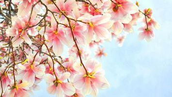 Фото бесплатно дерево, ветви, цветы