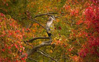 Photo free beak, autumn, trees