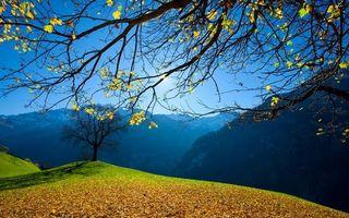 Фото бесплатно солнце, трава, листва