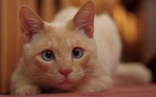 Фото бесплатно кот, рыжий, глаза