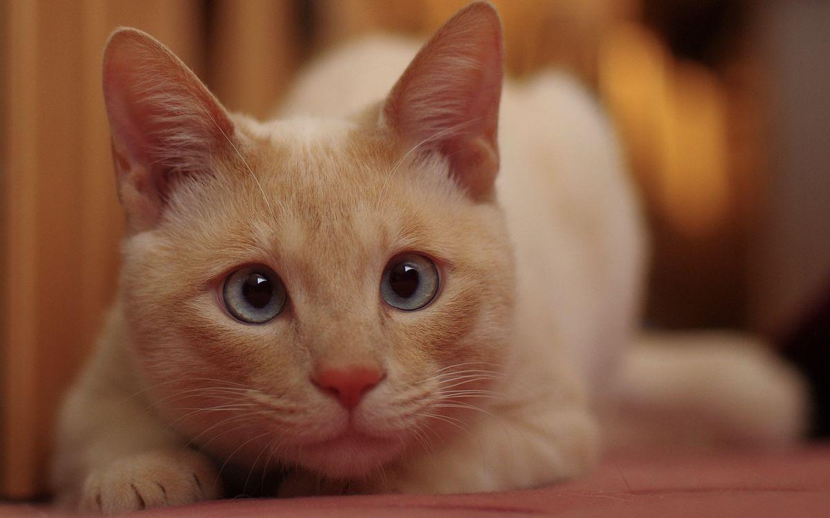Фото бесплатно кот, рыжий, глаза - на рабочий стол