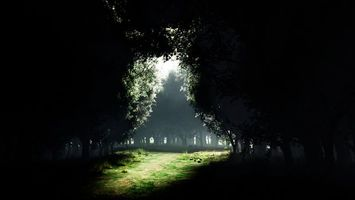 Фото бесплатно лес, деревья, свет, красиво, тропинка, трава, природа