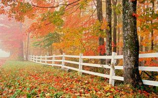 Фото бесплатно листья, осень, деревья, забор, свет, лужайка, природа