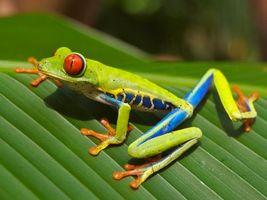 Фото бесплатно лягушка, жаба, зелена