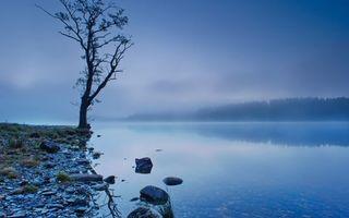 Фото бесплатно небо, облака, туман, дерево, листья, ветки, камни, берег, трава, лес, пейзажи