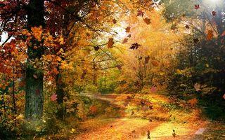 Фото бесплатно осень, желтый, дорога, лес, деревья, солнце, природа