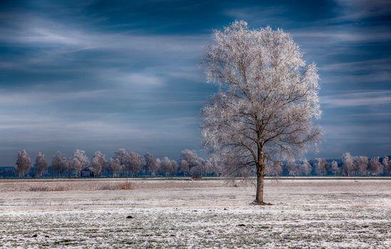 Фото бесплатно поле, одинокое, дерево