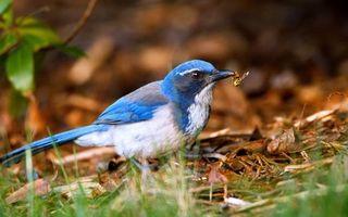 Бесплатные фото птичка,синяя,перья,окрас,оперение,хвост,крылья