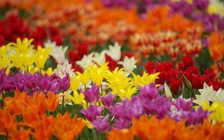 Бесплатные фото разные,желтые,оранжевые,фиолетовые,красные,белые,цветы