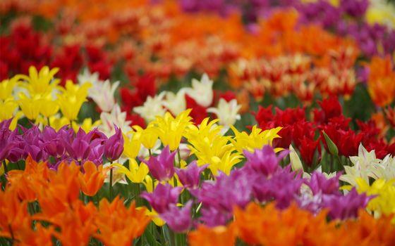 Фото бесплатно разные, желтые, оранжевые