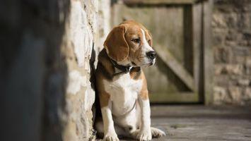 Фото бесплатно щенок, морда, лапы, усы, шерсть, стена, свет, взгляд, животные, собаки