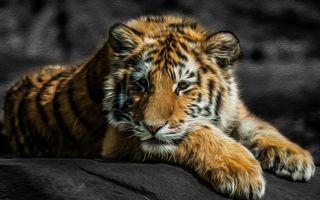 Бесплатные фото тигренок,взгляд,задумчивость,ушки,лапы,рисованный,3d графика