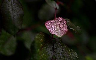 Фото бесплатно ветка, листья, зеленый