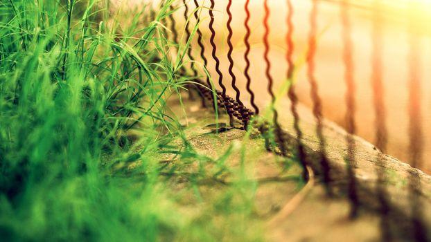 Бесплатные фото забор,бордюр,трава,растения,зелень,прутья,ограждение,улица,бетон,железо,природа