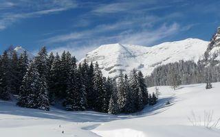 Фото бесплатно снег, деревья, пейзаж