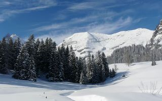 Заставки снег, деревья, пейзаж