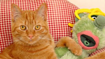 Бесплатные фото кот,рыжий,рыжие,глаза,диван,игрушки,кошки