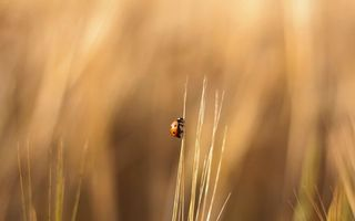 Photo free ladybug, blade of grass, field