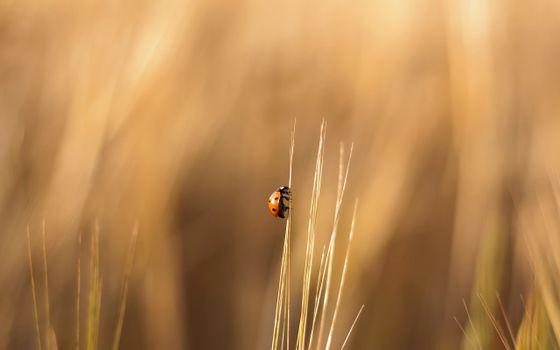 Photo free ladybug, blade of grass, field
