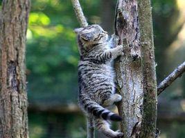 Бесплатные фото котенок,ползет,вверх,по дереву,кошки