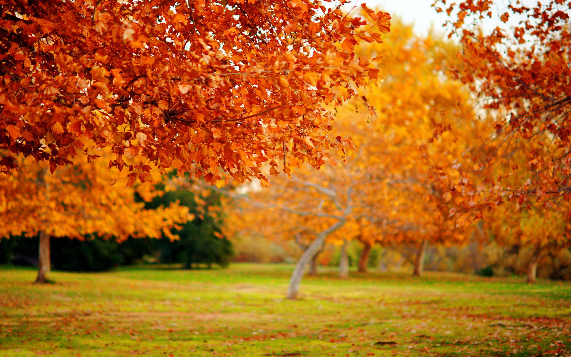 Парк деревья осень трава листья