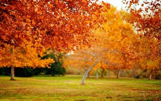 Фото бесплатно парк, деревья, осень