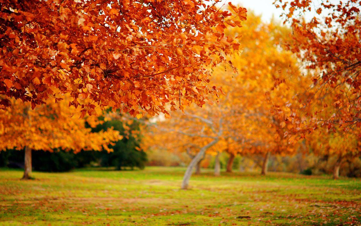 Фото бесплатно парк, деревья, осень, трава, листья, макро, пейзажи, природа, природа - скачать на рабочий стол