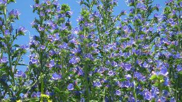 Бесплатные фото природа, цветы