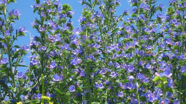 Фото бесплатно природа, цветы