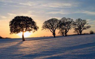 Бесплатные фото закат,солнце,деревья,лучи,снег,зима,пейзажи