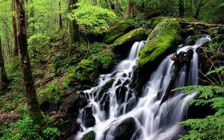 Фото бесплатно горы, деревья, трава, ручей, камни, мох