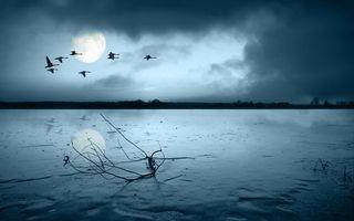 Бесплатные фото гуси,полет,небо,тучи,луна,осень,зима