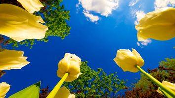 Бесплатные фото желтые,розы,лепестки,трава,небо,солнце,цветы