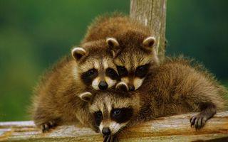 Фото бесплатно животные, дерево, перекладина, забор, шерсть, мех