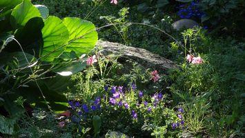 Фото бесплатно колокольчики, растения, цветки