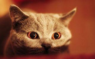 Бесплатные фото кот,серый,стол,восход,солнце,свет,глаза