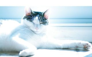 Заставки кот, сон, лапа