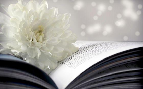 Фото бесплатно лепестки, книга, бумага