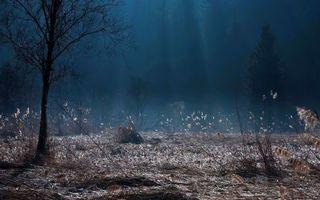 Бесплатные фото лес,деревья,трава,кусты,темно,лучи,природа