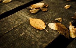 Фото бесплатно листья, скамейка, деревянная, осень, листопад, холод, природа