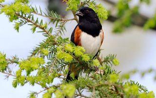 Бесплатные фото маленькая,ветка,клюв,иголки,глаза,голова,птицы